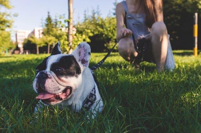 Dlaczego Mój Pies Się Drapie Weterynarz Sosnowiec